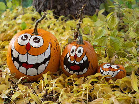 Three smiling painted jack-o-lantern pumpkins, a large, medium and small, sitting among dried leaves with a tree trunk in the background. Shallow depth of field.