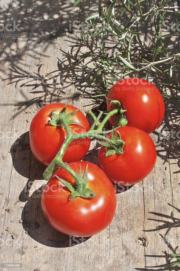 Group of Tomatos Surrounded by Rosemary royalty-free stock photo