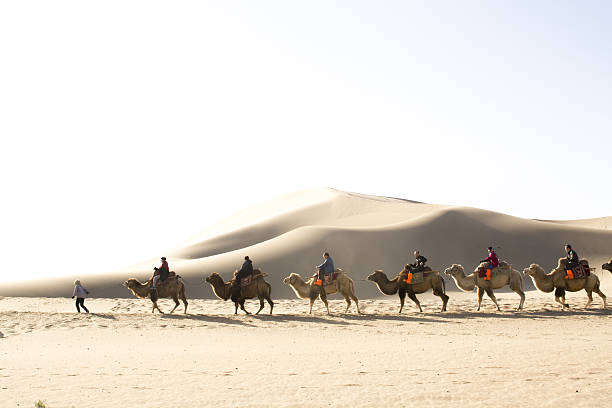 Group of tourists are riding camels in the desert Dunhuang,gansu, China - October 11, 2014: Group of tourists are riding camels in the desert at Dunhuang City , China. silk road stock pictures, royalty-free photos & images