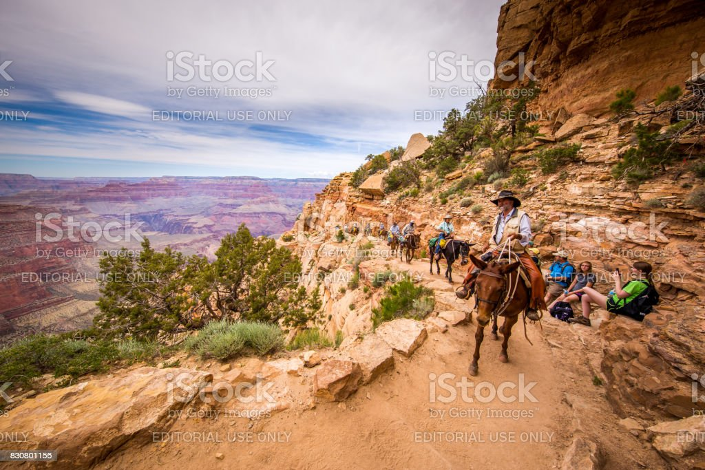 A group of tourists are riding horses on the canyon. stock photo