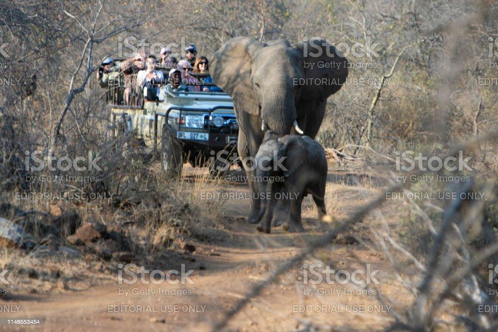 kruger national park, south Africa-September 2018; A tourist group in...
