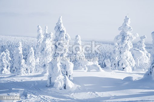 istock A group of trees at winter time covered in snow 151530356