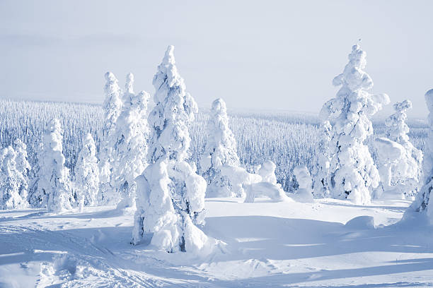 A group of trees at winter time covered in snow stock photo
