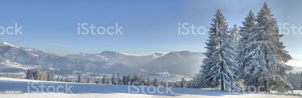 Group of trees in a wonderful winter landscape stock photo