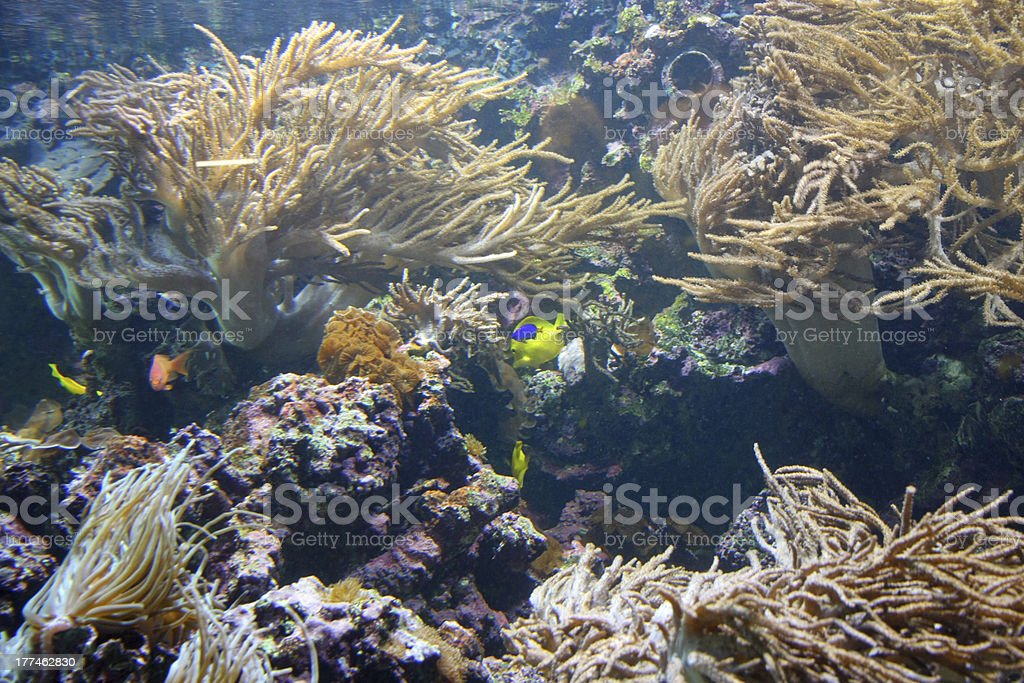 Group of tropical fish while swimming royalty-free stock photo