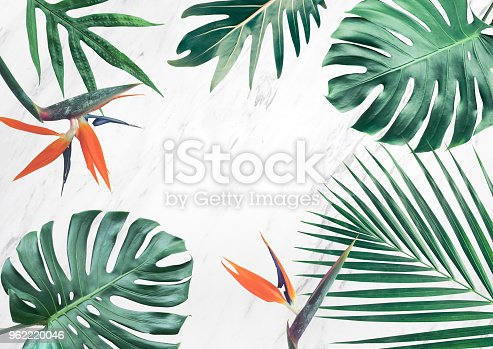 istock Group of tropical leaves on marble background.Copy space.Nature concept 962220046