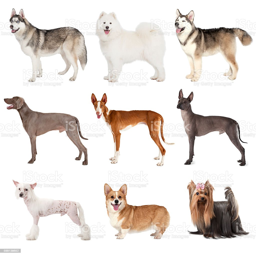Group of various dogs stock photo