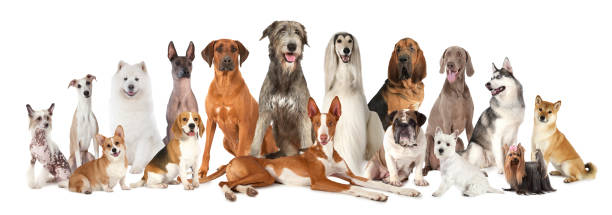 Group of various kind of purebred dogs stock photo