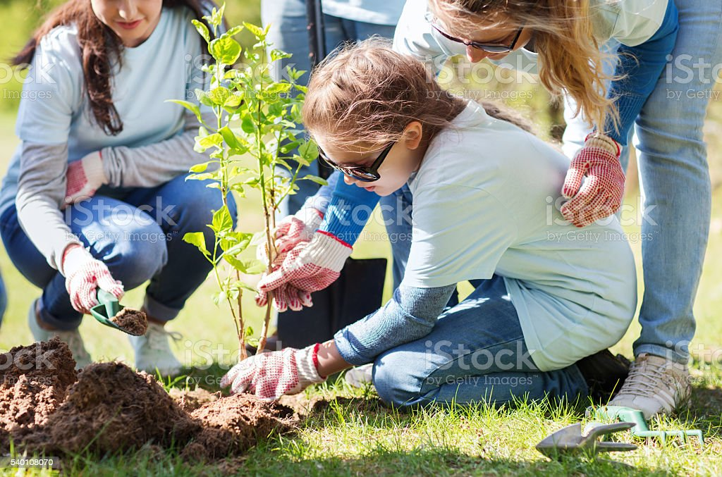 group of volunteers planting tree in park stock photo