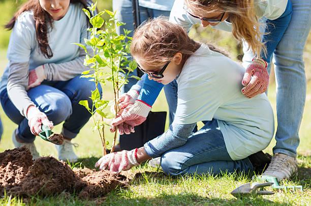 gruppo di volontari di piantare albero nel parco - piantare foto e immagini stock