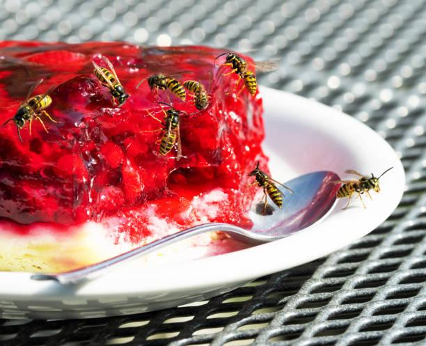 Gruppe von Wespen auf Himbeer-Tarte – Foto