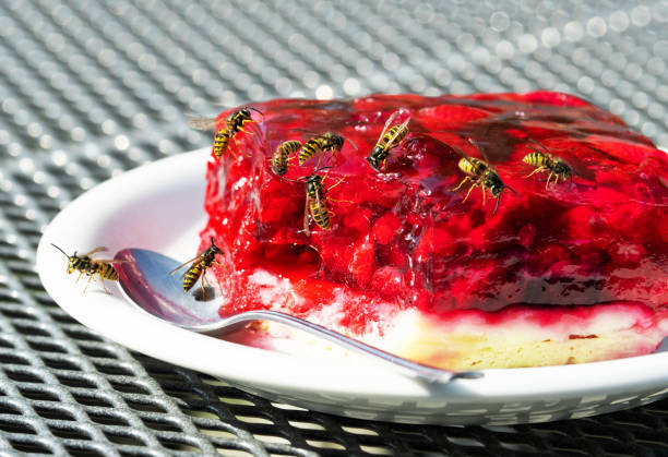 Group of wasps on raspberry tart stock photo