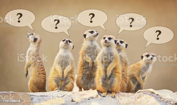 Group of watching surricatas with question marks picture id1141759416?b=1&k=6&m=1141759416&s=612x612&h=baqm7aabwxawk336qnjkv9gydvmydi77tcm4ivvl pi=