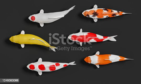 1140293905 istock photo A group of white koi fish in red stripes. Fancy crap in gold and orange in black. 3D Rendering 1249363066