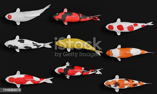 1140293905 istock photo A group of white koi fish in red stripes. Fancy crap in gold and orange in black. 3D Rendering 1249363075