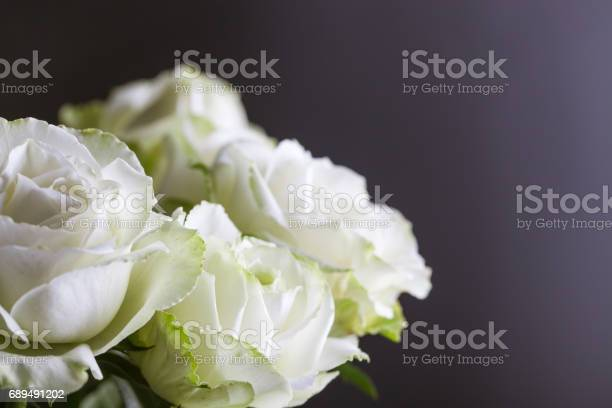 Group of white red roses with black background studio shot picture id689491202?b=1&k=6&m=689491202&s=612x612&h=1n8newl ysv2ydfrzbvqjpruzqg9v2rs eaphy dwuq=