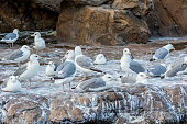 A group of white Seagulls on stone