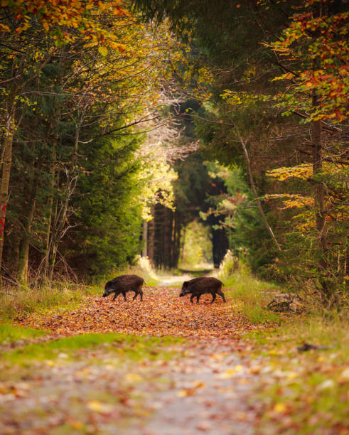group of wild boars in the middle of forest - cinghiale animale foto e immagini stock