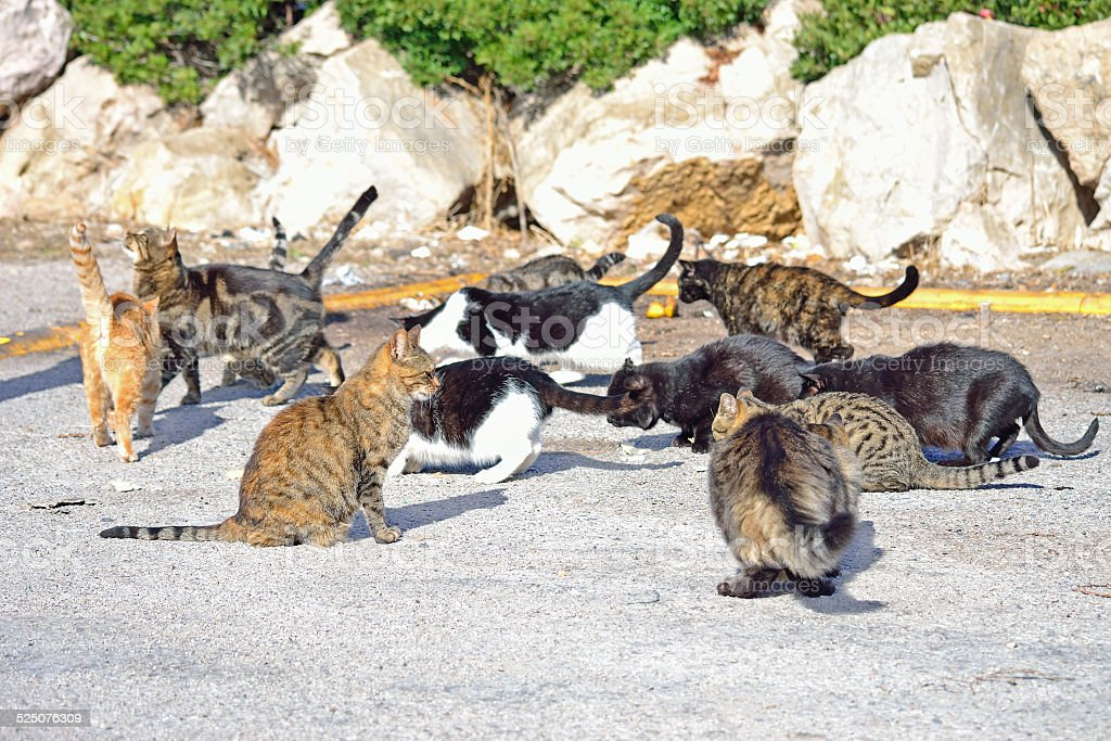 group of wild cats eating stock photo