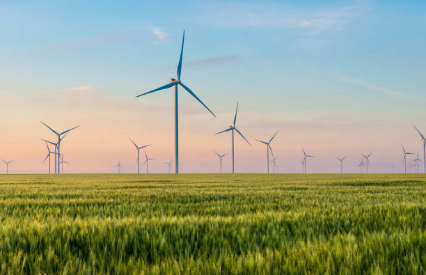Group of windmills for electric power production in the green field of wheat stock photo