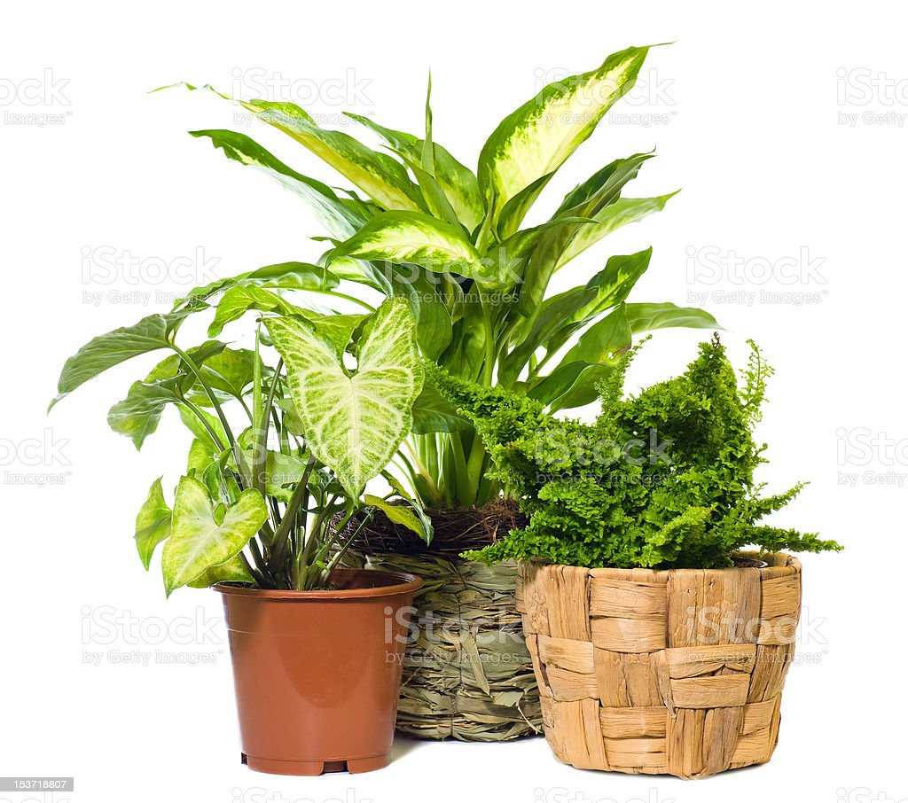 Group of window plant stock photo