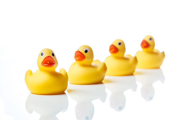 Group of yellow rubber duck toys stock photo