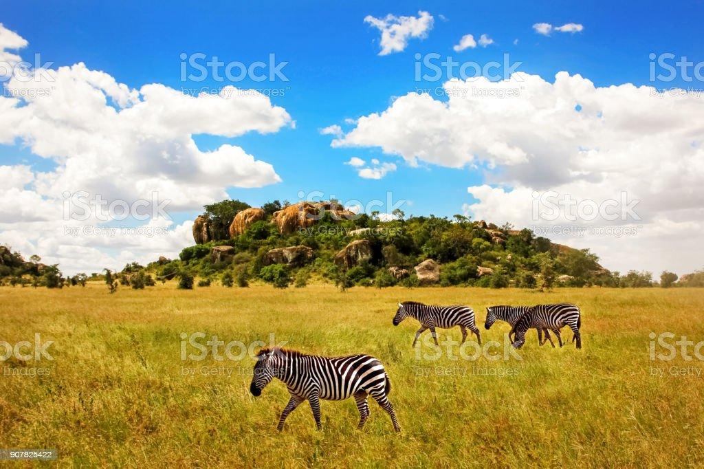 シマウマ岩と雲と青空を背景に、セレンゲティ国立公園でのグループ。アフリカ。タンザニア。 ストックフォト