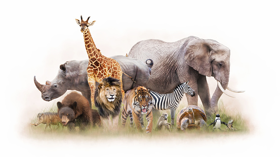 Large group of zoo animals together isolated on white