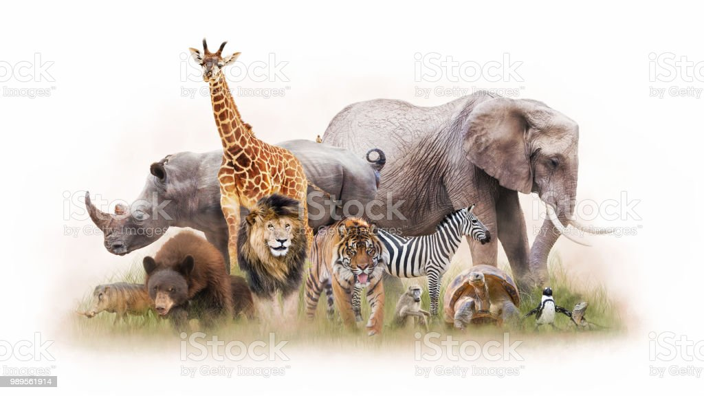 Group of Zoo Animals Together Isolated stock photo