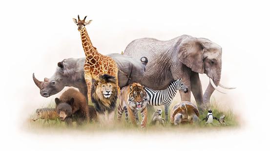 小組動物園動物一起被隔絕了 照片檔及更多 一群動物 照片