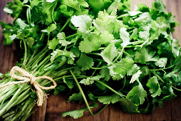 Group on cilantro tied together Herb: Bunch of fresh cilantro. Focus on few roots on foreground. cilantro stock pictures, royalty-free photos & images