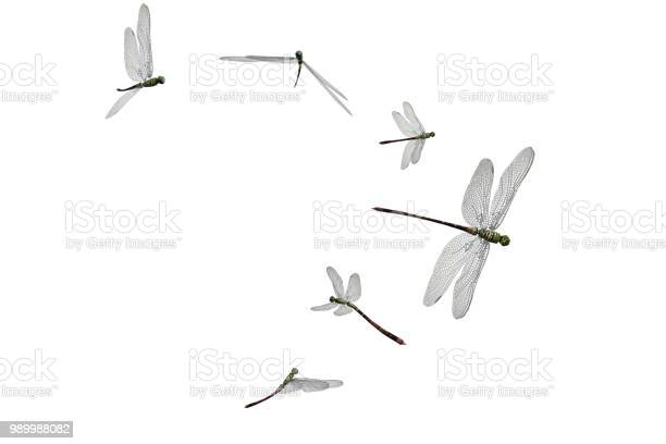 Group on dragonflies isolated on white 3d render picture id989988082?b=1&k=6&m=989988082&s=612x612&h= guevi9sc0pozptk7gvwp3skseyenri4bypemcvhgyc=