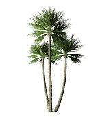large palm leaf isolated one white backgrounds