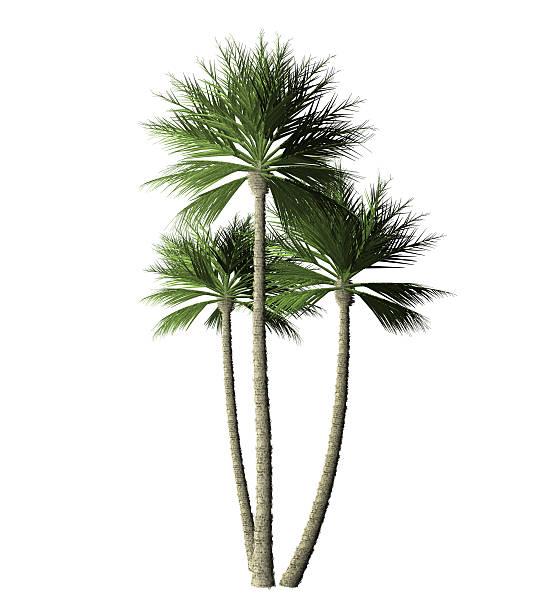 Group palm trees digital painting picture id512524492?b=1&k=6&m=512524492&s=612x612&w=0&h=6qa5dwdxef hjedadu4nseclw6xof8rb nztw4mprt8=