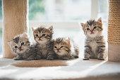 sweet kitten portrait