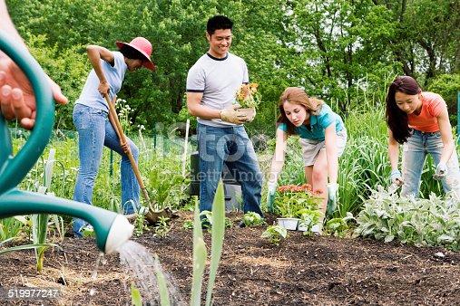 istock Group planting in community garden 519977247