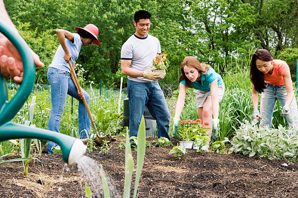 Group planting in community garden Group planting in community garden community garden stock pictures, royalty-free photos & images