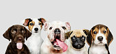 istock Group portrait of adorable puppies 1094310798