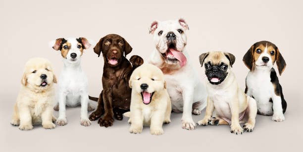 Group portrait of adorable puppies stock photo