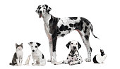 istock Group portrait of black and white animals, pets. 482535579