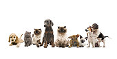 group portrait of cats and dogs