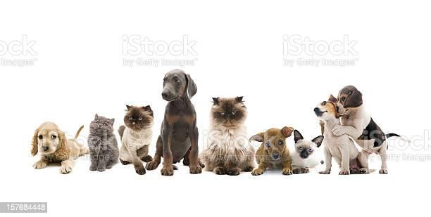 Group portrait of pets picture id157684448?b=1&k=6&m=157684448&s=612x612&h=6dc8w84jl5bw10cpqbv1zfbo6egirauu3n90fbkqyp4=