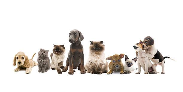 Group portrait of pets picture id157684448?b=1&k=6&m=157684448&s=612x612&w=0&h=gt ddd3xlaplqo4evwkt3udjpytxddez0kp1ggul2oa=
