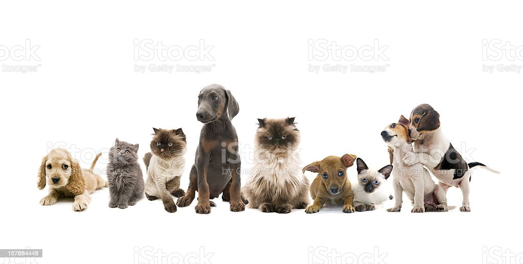 group portrait of pets stock photo