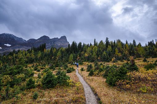 Group travelers trekking on trail in autumn forest on gloomy at Assiniboine provincial park