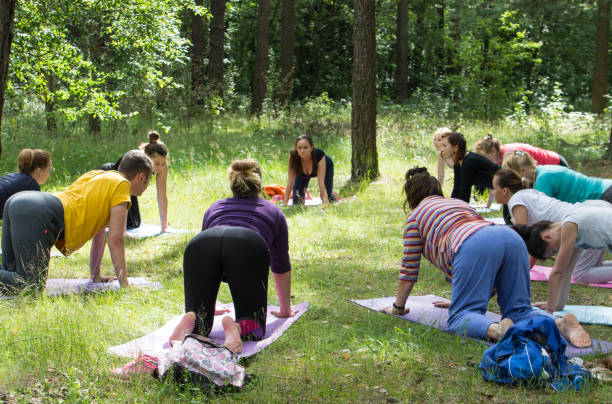 A group yoga session held outdoors in the summer. People doing a Cat Pose (Marjaryasana). stock photo