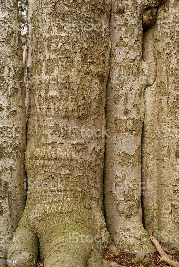Grouped trees royalty-free stock photo