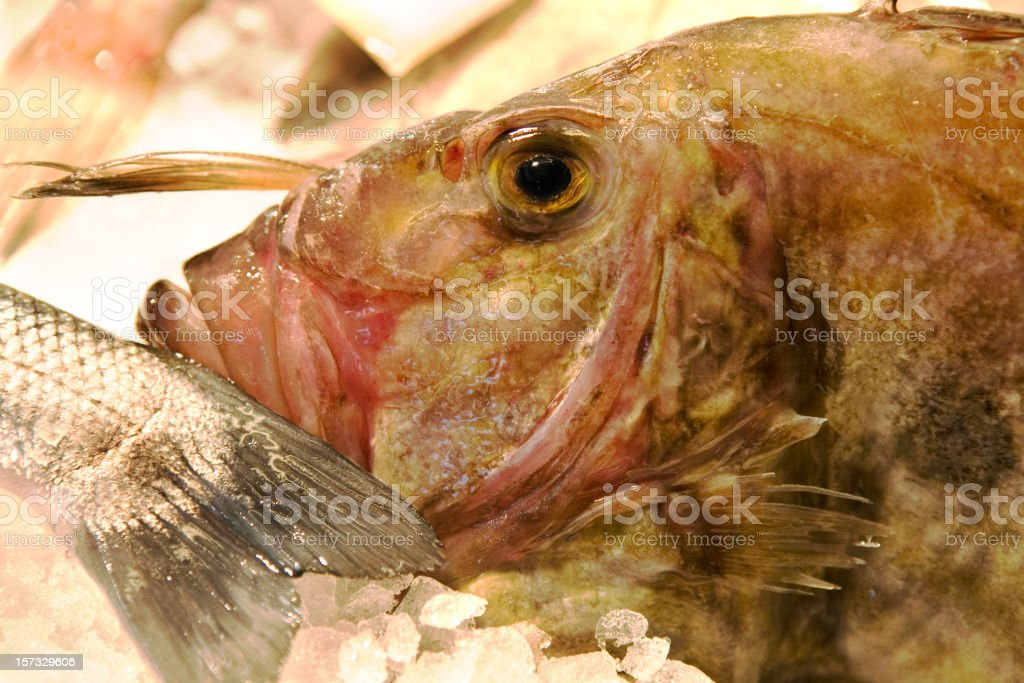 Grouper at  Seafood Market Venice Italy royalty-free stock photo