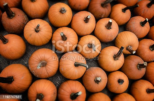 Grouping Of Orange Pumpkins In Autumn Fall
