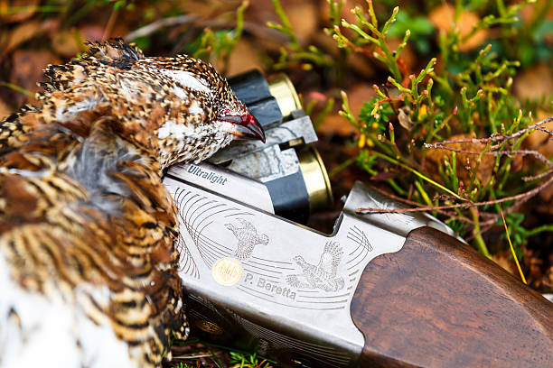 Grouse hunting. stock photo